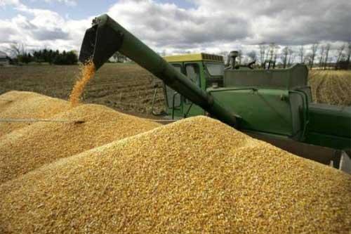 Аграрії Полтавщини намолотили 2 мільйони тонн зерна